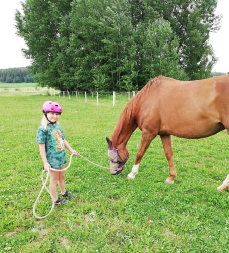 Odpoledne u koní